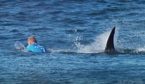 サーファーがサメを殴って撃退!軽傷で済んだサーファーは「またここでサーフィンしたい」と話す